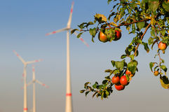 Apples and wind turbines Stock Photo