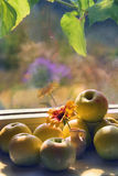 Apples on the window. Apples and flower in small jug on the window Royalty Free Stock Image