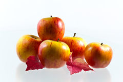 Apples with wine leaves Royalty Free Stock Image