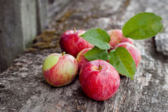 Apples on a wooden background. Harvesting apples in the garden royalty free stock photos