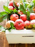 Apples on wooden background stock images