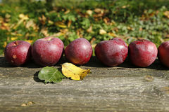 Apples on a wooden board Stock Photo