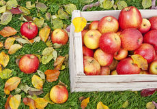 Apples in a wooden box Stock Photo