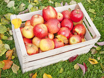 Apples in a wooden box Royalty Free Stock Photos