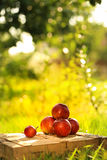 Apples on the wooden box. Mountain of apples standing on the wooden box in green grass in the garden. Summer color image. Circle bright bokeh. Five red apples Stock Images