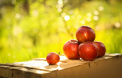 Apples on the wooden box. Mountain of apples standing on the wooden box in green grass in the garden. Summer color image. Circle bright bokeh. Five red apples Royalty Free Stock Images