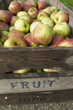 Apples in wooden box Stock Images