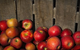 Apples in a wooden crate. Apples in a rough wooden crate Stock Images