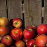 Apples in a wooden crate. Square banner size Stock Image