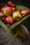 Apples in  a wooden wheelbarrow Stock Images