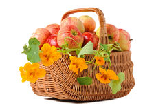 Apples in woven basket Stock Photo