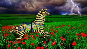 Apples & Zebras Royalty Free Stock Images