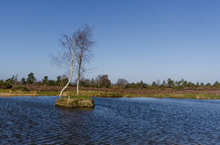 Appleslade Inclosure. Landscapes near Appleslade Inclosure in the New Forest National Park Stock Photography