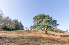 Appleslade Inclosure. Landscapes near Appleslade Inclosure in the New Forest National Park Royalty Free Stock Photos