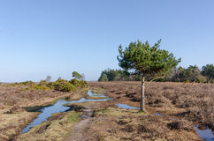 Appleslade Inclosure. Landscapes near Appleslade Inclosure in the New Forest National Park Royalty Free Stock Photo