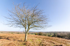 Appleslade Inclosure. Landscapes near Appleslade Inclosure in the New Forest National Park Stock Photos