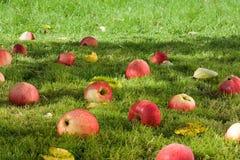 Appless tombé. Photos libres de droits
