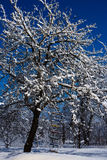 Appletree με το χιόνι στους κλάδους στη χειμερινή νύχτα Στοκ Φωτογραφίες