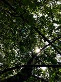 Appletree Στοκ Εικόνα