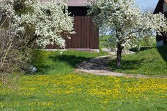 Appletree bloom in south germany Stock Photos
