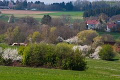 Appletree bloom in south germany Royalty Free Stock Photo