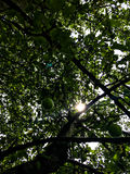 Appletree Stock Image