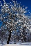 Appletree med snö på filialer på vinternatten Arkivfoton