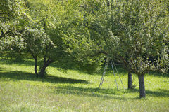 Appletrees Στοκ εικόνα με δικαίωμα ελεύθερης χρήσης