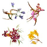 Application bouquet of dry bizarre lily petals and pressed mult royalty free stock images