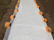 Application of a covering material on an earthen bed to protect seedlings.  Royalty Free Stock Photo