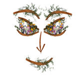 Application, face of dried pressing bright flowers Royalty Free Stock Photo
