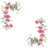 Application sèche de fleur faisante le coin de décoration, un bouquet de géranium photo stock