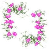 Application sèche de fleur faisante le coin de décoration, un bouquet de géranium photos stock