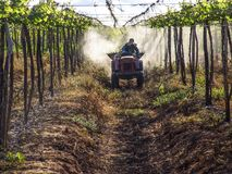 applicazione degli antiparassitari nella piantatura dell'uva Fotografie Stock