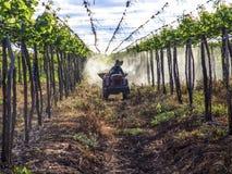 applicazione degli antiparassitari nella piantatura dell'uva Immagini Stock