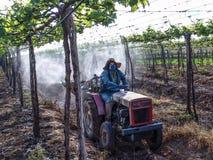 applicazione degli antiparassitari nella piantatura dell'uva Fotografia Stock