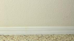 Applicera blå målares band stock video