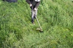 Applikationbeskärare Meja grönt gräs genom att använda en revbeskärare Royaltyfria Foton