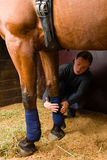 Apply bandages. Woman installs bandages for the horse in the stall Stock Image