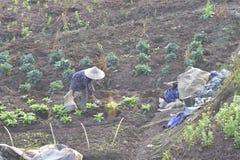 Apply fertilizer. The peasants fertilize the field Royalty Free Stock Photo