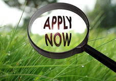Apply now. Magnifying glass with the word apply now on grass background. Selective focus Royalty Free Stock Images