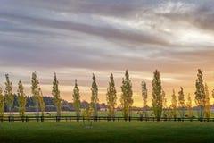 Appoggi la linea accesa dei pioppi un recinto tutto in una fila negli altopiani del sud di NSW Fotografia Stock Libera da Diritti