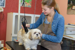 Appointment to pet groomer. Appointment to a pet groomer royalty free stock images