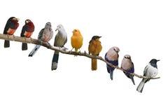 Appollaiarsi degli uccelli Fotografia Stock