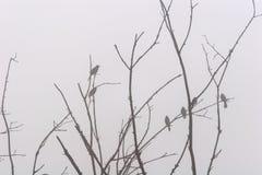 Appollaiato nella nebbia Fotografia Stock