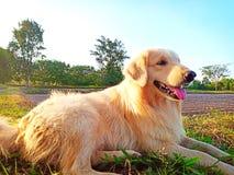 Apportörhunden är brun royaltyfria foton