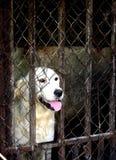 apportierhund Lizenzfreies Stockfoto