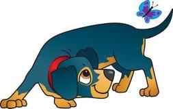 Cane di salsiccia nero sveglio che insegue una farfalla Immagine Stock Libera da Diritti