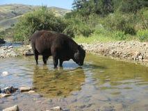 Apprécier The Creek Photos stock