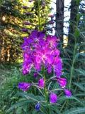 Apprécier la nature et ses nombreuses plantes et fleurs étonnantes Photo libre de droits
